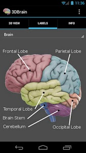 Download 3D Brain 1.0.3 APK