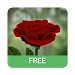 Download 3D Rose Live Wallpaper Free 5.0 APK