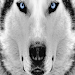 Download BLUE EYES PLAYER 1.2 APK
