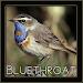 Download Bluethroat Bird Chirping Sounds 1.0 APK