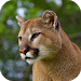 Download Cougar Sounds 1.0 APK
