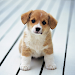 Download Cute Little Puppies Wallpapers 1.0 APK