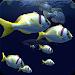 Download Fish Schooling VR 1.5 APK