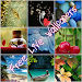 Download Free Live Wallpaper 1.4 APK