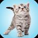 Download Kitten Sounds 2.0 APK