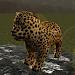 Download Real Cheetah Cub Simulator 1.4 APK