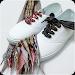 Download Shoelace knots styles 2.0 APK
