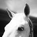 Download Sweet Horse Wallpapers 1.2 APK