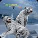 Download Tigers of the Arctic 1.0 APK
