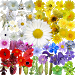 Download What's that flower?  APK